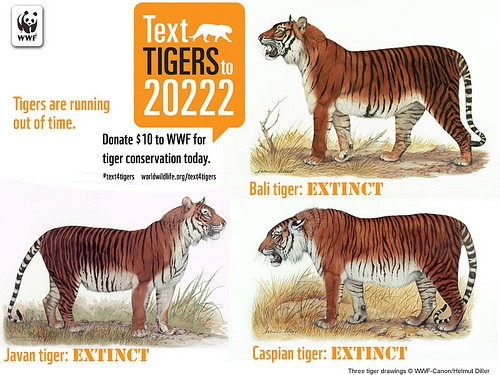 10 Siberian Tiger Facts That Would Show They Are Soon To